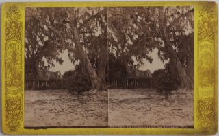 [Collection of Fifteen Original Albumen Stereoview Photographs of Florida from the America Illustrated Tropical Series].