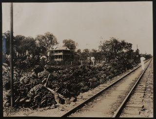 [Collection of 120 Large Original Gelatin Silver Photographs of the United Fruit Company's Banana Plantations in the Bocas de Toro Region of Panama and Southern Costa Rica, Showing the Trains, Stations and a Bridge of the Changuinola Railway, Banana Plantations Operations, Administrative and Residential Buildings in Almirante, Loading Bananas to the Steamers, Portraits of the UFCO's Associates, West Indian Workers, Indigenous People, etc.]