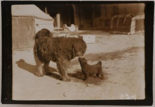 [Collection of Thirty-Three Loose Gelatin Silver Photos, Taken in the Modern-Day Xinjiang Uyghur Autonomous Region of China during Hedin's Sino-Swedish Expedition of 1927-35; With Hedin's Carte-de-visite, and Two Published Accounts of the Expedition, Featuring Four of the Photos from the Collection: Hedin, S. Åter till Asien (Stockholm, 1928), and Berger, A., Lieberenz, P. Mit Sven Hedin durch Asiens Wüsten (Berlin, 1932)].