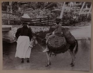 Album with 238 Original Gelatin Silver Photographs of the Caribbean Taken during a Cruise, with...