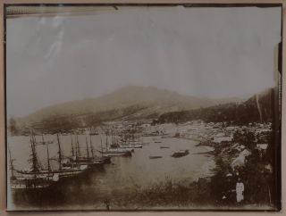 [Album with 238 Original Gelatin Silver Photographs of the Caribbean Taken during a Cruise, with Unique Snapshots and Large Studio Photographs of the Destruction of St. Pierre, Martinique; and Lively Snapshots Cuba, Jamaica, Bahamas, St. Vincent, Grenada, Florida River Steamers, etc., Titled:] A Hamburg-American Cruise to the West Indies, Jan. 10 – Feb. 3, 1903.