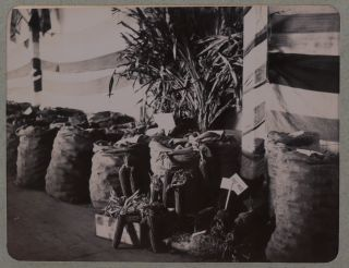 [Album with 108 Original Gelatin Silver Photos of Southern Rhodesia, Showing the Sabiwa and Antenior Gold Mines, Scenes from a Prospecting Expedition to the Sengwe, Omay, and Zambezi Rivers, Views of Bulawayo during the First Election of the Legislative Council in April 1899, Exhibits at the Bulawayo Agricultural Fair, Native Villages, Portraits of Native People, Jack Warwick, J.C. Knapp, Mowbray Farquhar, Miss Cecilia Lawley, and Others].